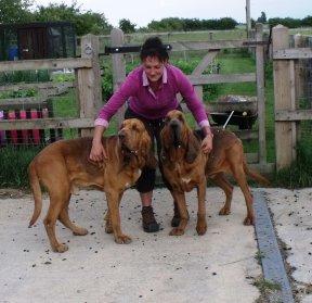 animal reiki training