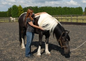 equine reiki horses classes