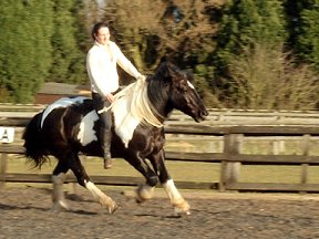 reiki for horses workshops