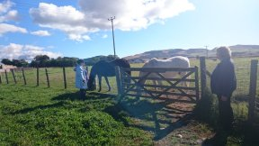 equine reiki session in scotland