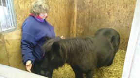 horse given animal reiki in scotland