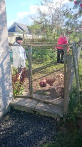 chickens given animal reiki in scotland