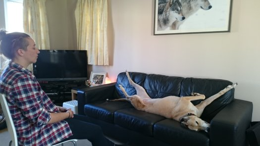 canine reiki treatment in scotland