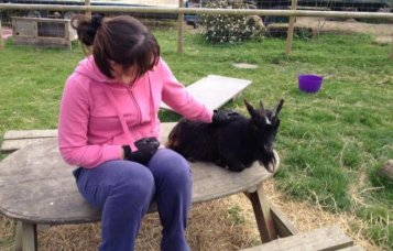 animal reiki training at master practitioner level